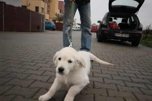 Kolik je poplatek z psa v Berlíně