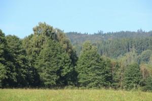 Lesnictví na Slovensku