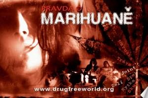pravda o marihuaně Řekni ne drogám – řekni ano životu